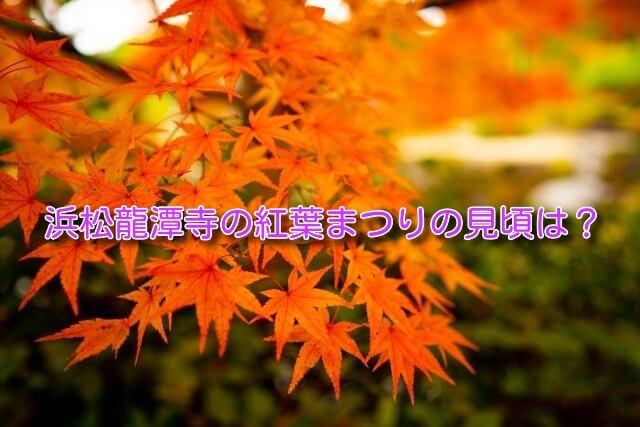 浜松龍潭寺の紅葉まつりの見頃や紅葉の庭園夜の特別公開はいつ?