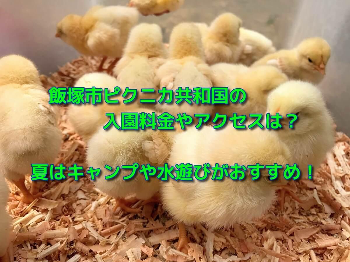 飯塚市ピクニカ共和国の入園料金やアクセスは?夏はキャンプや水遊びがおすすめ!