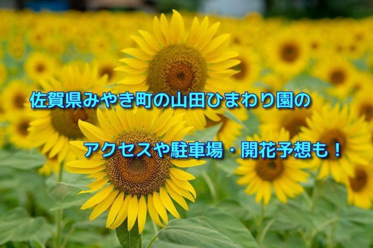 佐賀県みやき町の山田ひまわり園のアクセスや駐車場・開花予想も!
