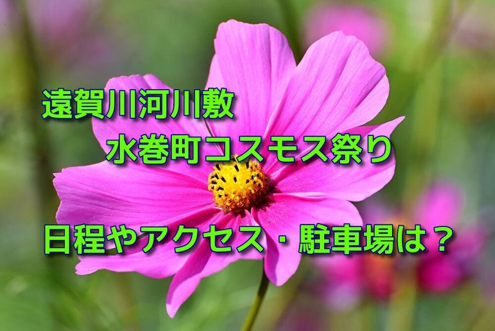 遠賀川河川敷の水巻町コスモス祭り2019の日程やアクセス・駐車場は?