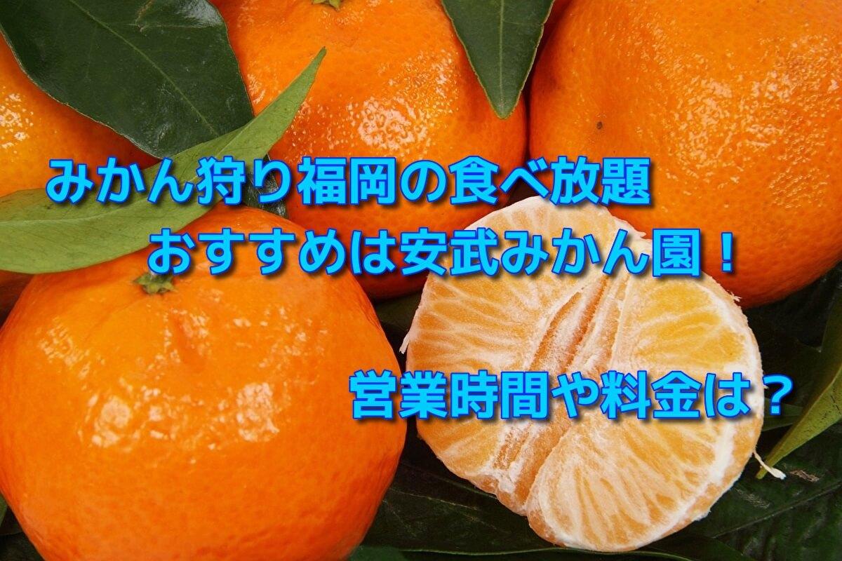 みかん狩り福岡の食べ放題でおすすめは安武みかん園!営業時間や料金は?
