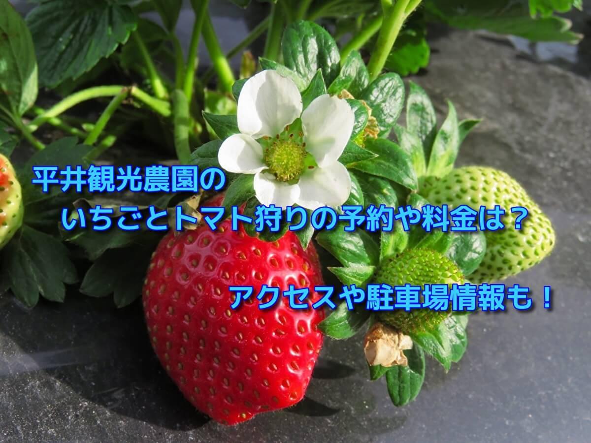 平井観光農園のいちごとトマト狩りの予約や料金は?アクセスや駐車場情報も!
