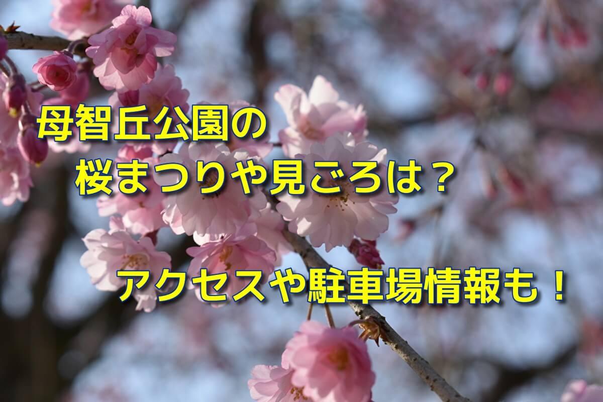 母智丘公園の桜まつりや見ごろは?アクセスや駐車場情報も!