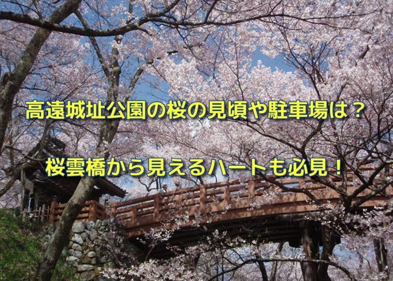 高遠城址公園の桜の見頃や駐車場は?桜雲橋から見えるハートも必見!