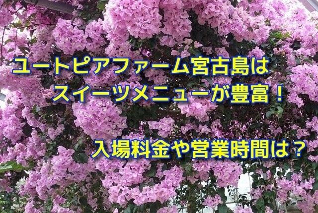 ユートピアファーム宮古島はスイーツメニューが豊富!入場料金や営業時間は?