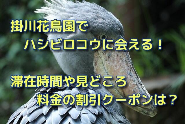 掛川花鳥園はハシビロコウに会える!滞在時間や見どころ・料金の割引クーポンは?