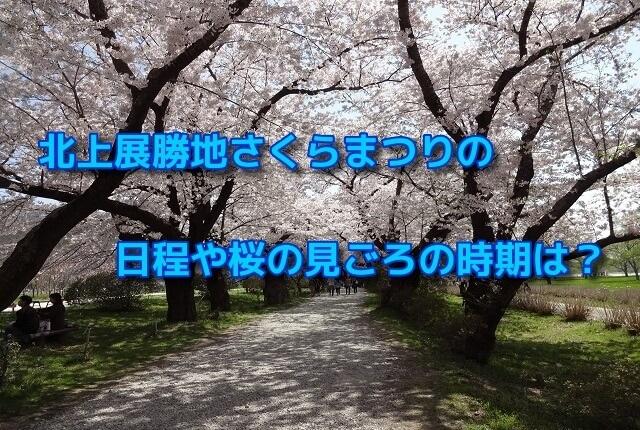 北上展勝地さくらまつりの日程や桜の見ごろの時期は?