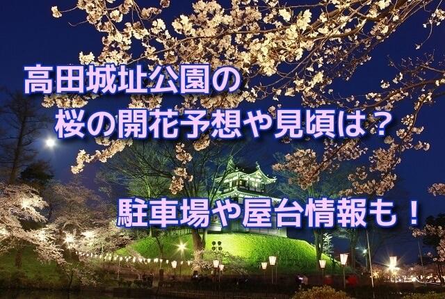 高田城址公園の桜の開花予想や見頃は?駐車場や屋台情報も!