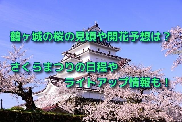 鶴ヶ城の桜の見頃や開花予想は?さくらまつりの日程やライトアップ情報も!
