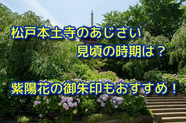 松戸本土寺のあじさい見頃の時期は?紫陽花の御朱印もおすすめ!