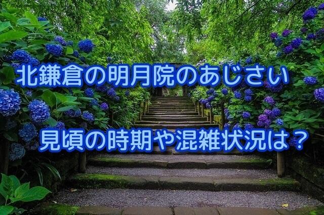 北鎌倉の明月院のあじさいの見頃の時期や混雑状況は?