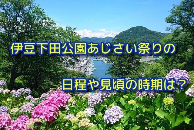 伊豆下田公園あじさい祭りの日程や見頃の時期は?