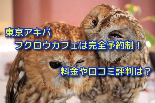 東京アキバフクロウカフェは完全予約制!料金や口コミ評判は?